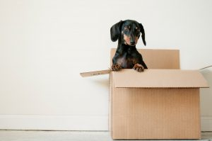 Buy Moving Boxes